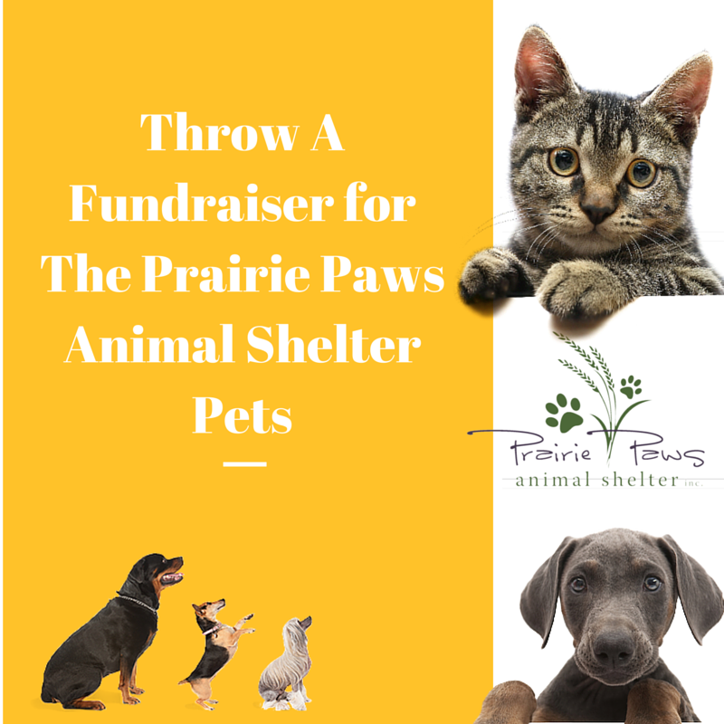 Throw A Fundraiser For The Shelter Animals!
