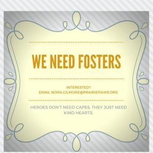 we-need-fosters