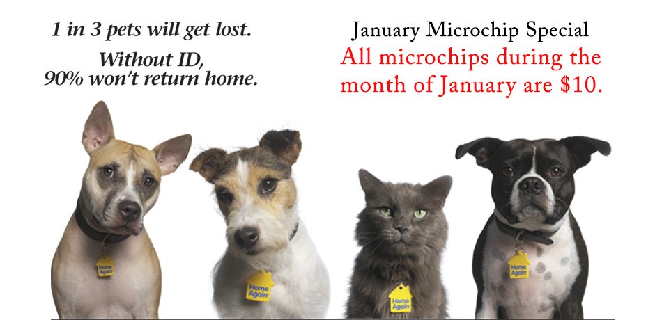 Microchip-web