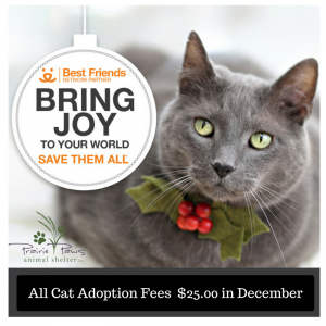 all-cat-adoption-fee-25-00-in-december