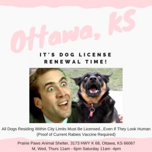 its-dog-license-renewal-time