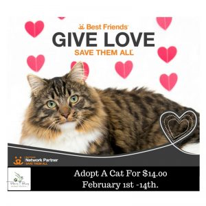 Adopt A Cat For $14.00 February 1st -14th.