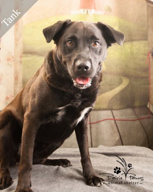 Tank (AWESOME DOG ALERT!) *Adoption Fee Fully Sponsored*